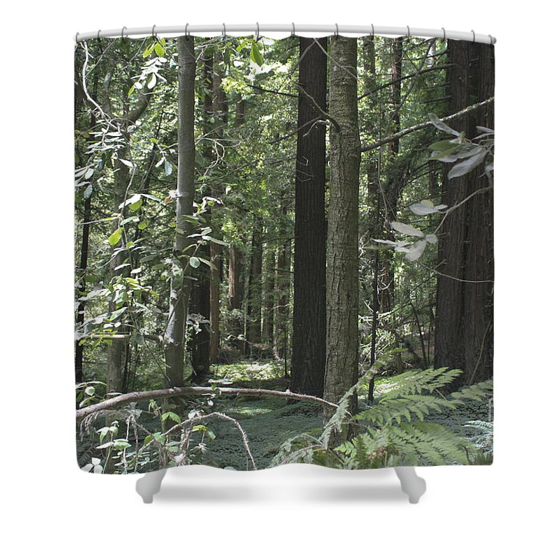 Landscape Shower Curtain featuring the photograph pr 138 - Frolicking Trees by Chris Berry