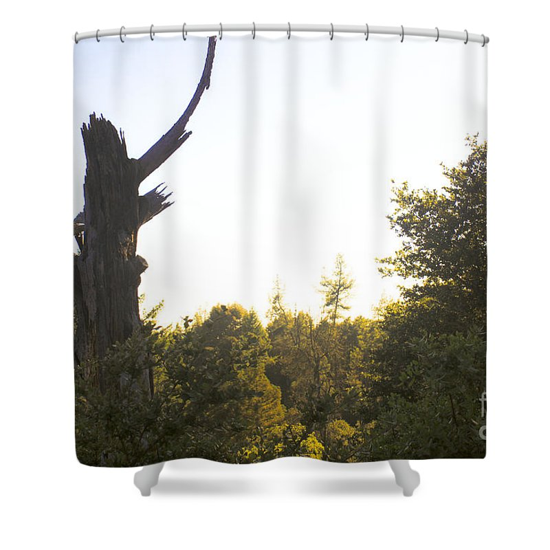Green Shower Curtain featuring the photograph pr 139 - Broken Kachina Doll by Chris Berry