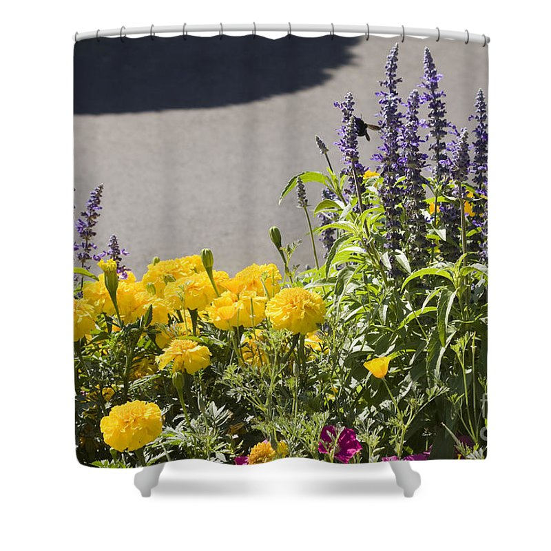 Landscape Shower Curtain featuring the photograph pr 141 - Flower Bed by Chris Berry