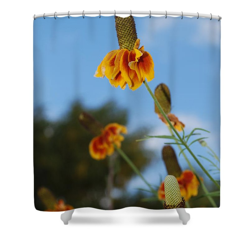 Shower Curtain featuring the photograph Prairie Cone Flowers Against Blue Sky Vertical Number One by Heather Kirk