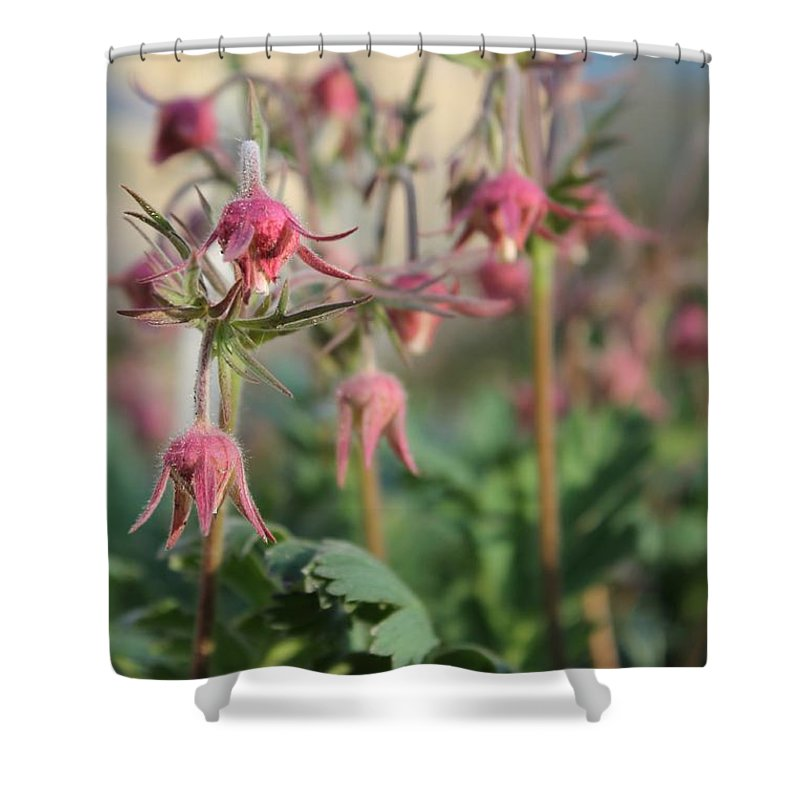 Shower Curtain featuring the photograph Prairie Smoke Gathering by Renee Croushore