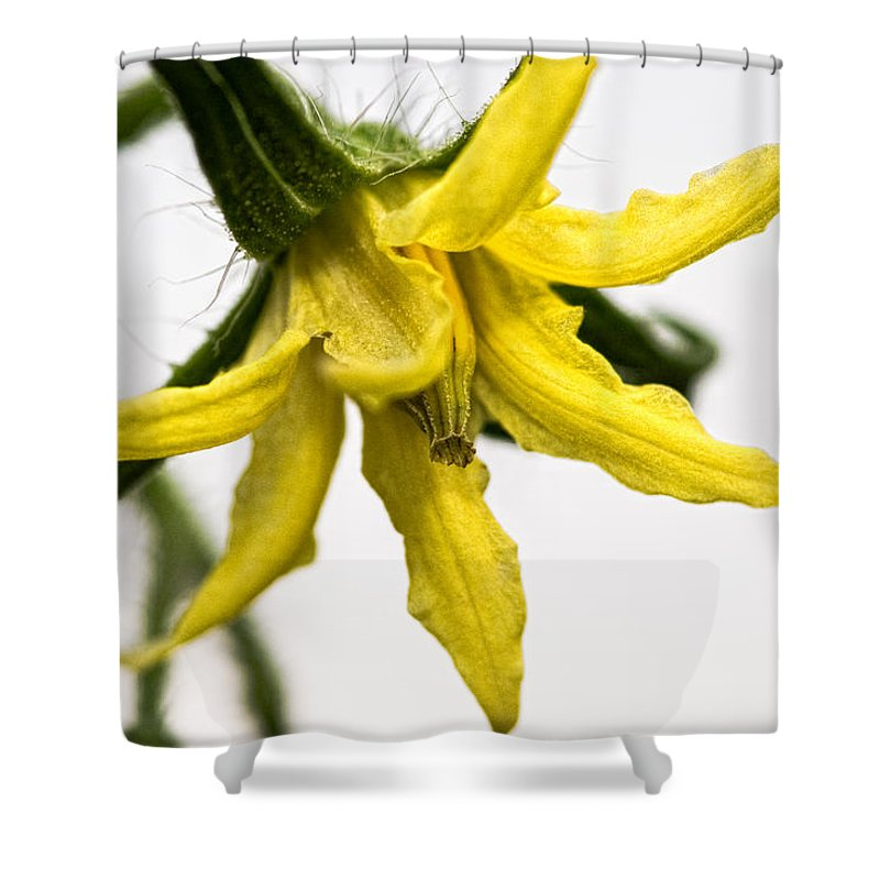 Tomato Shower Curtain featuring the photograph Pre-tomato by Christopher Holmes