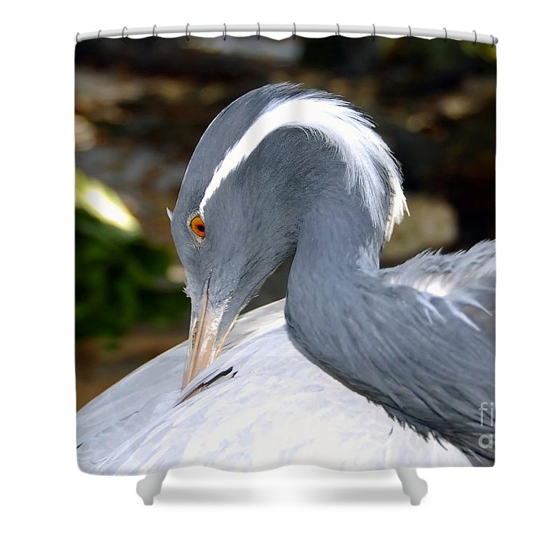 Bird Shower Curtain featuring the photograph Preening Bird by David Lee Thompson