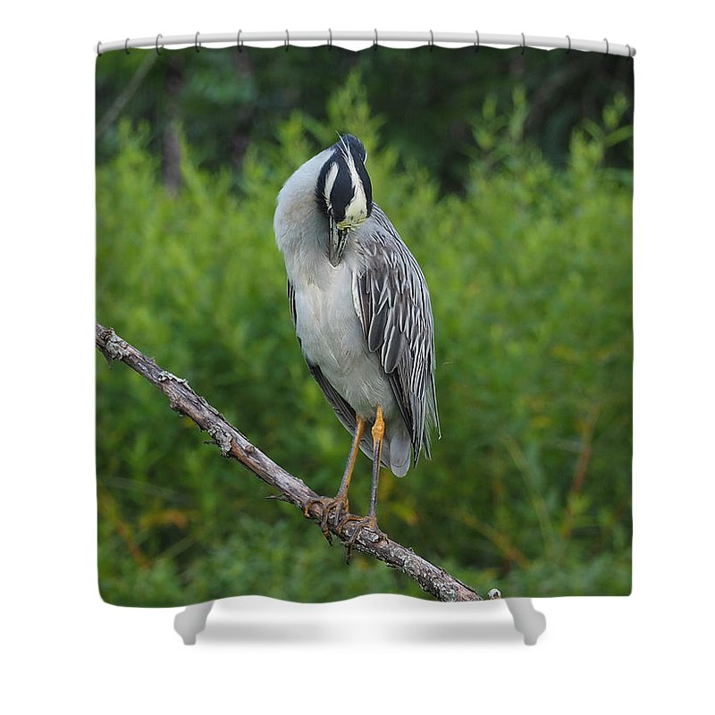 Heron Shower Curtain featuring the photograph Preening by Paula Ponath