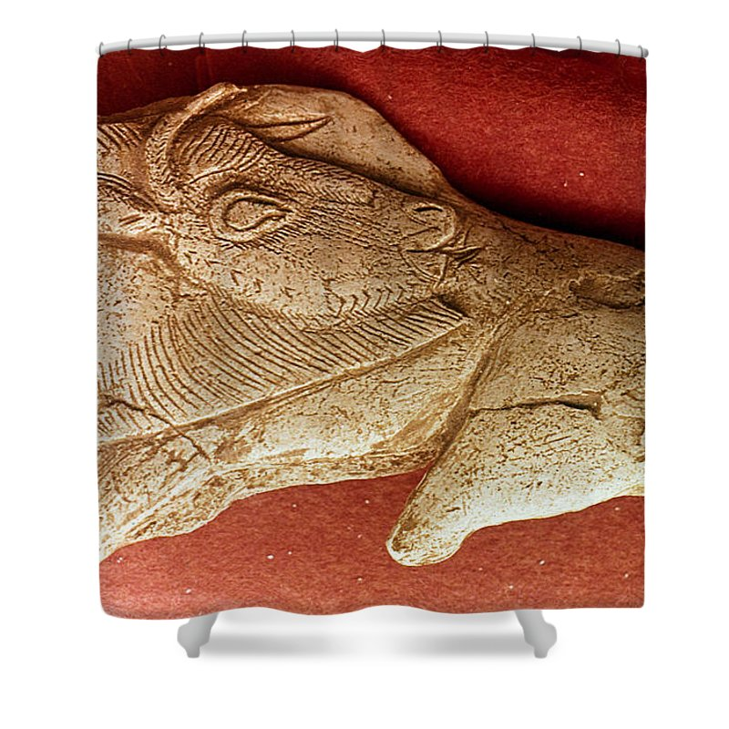 Ancient Shower Curtain featuring the photograph Prehistoric Bison Carving by Granger