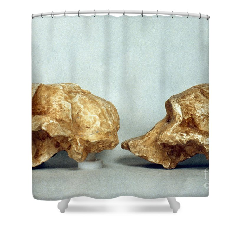 African Shower Curtain featuring the photograph Prehistoric Skulls by Granger