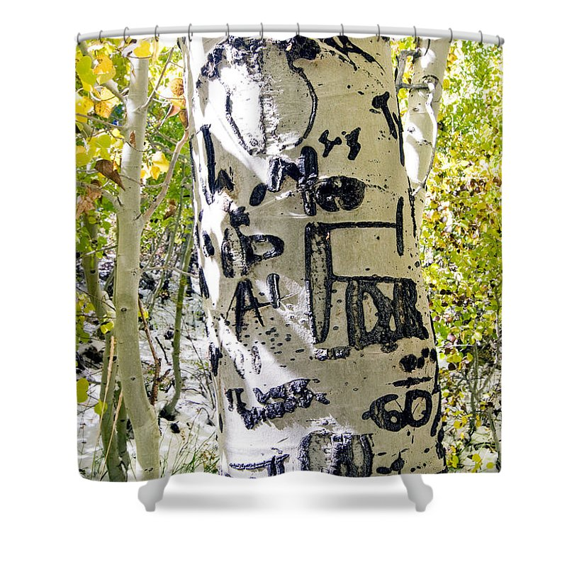 Trees Shower Curtain featuring the photograph Presidential Tree by Norman Andrus
