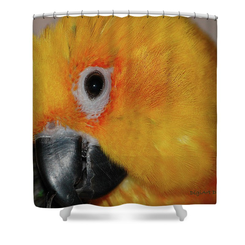 Bird Shower Curtain featuring the digital art Pretty Girl by DigiArt Diaries by Vicky B Fuller