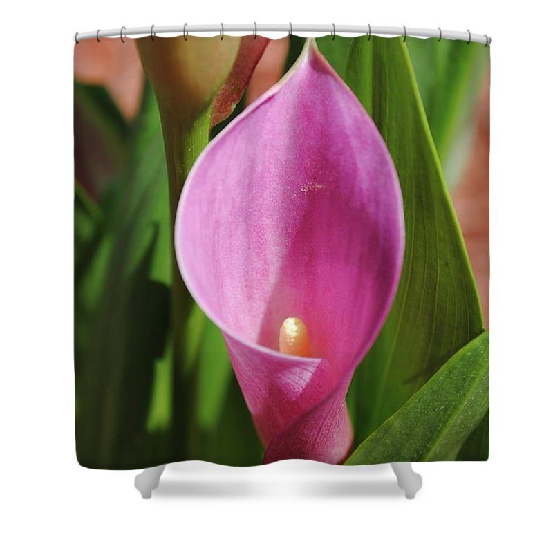 Flowers Shower Curtain featuring the photograph Pretty In Pink by RM Ross