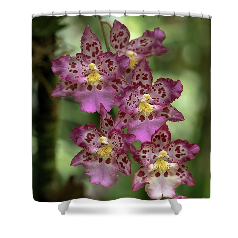 Orchids Shower Curtain featuring the photograph Pretty In Pink by Susan Rissi Tregoning
