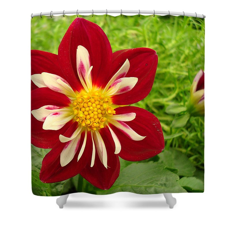 Kathy Bucari Shower Curtain featuring the photograph Pretty In Red by Kathy Bucari