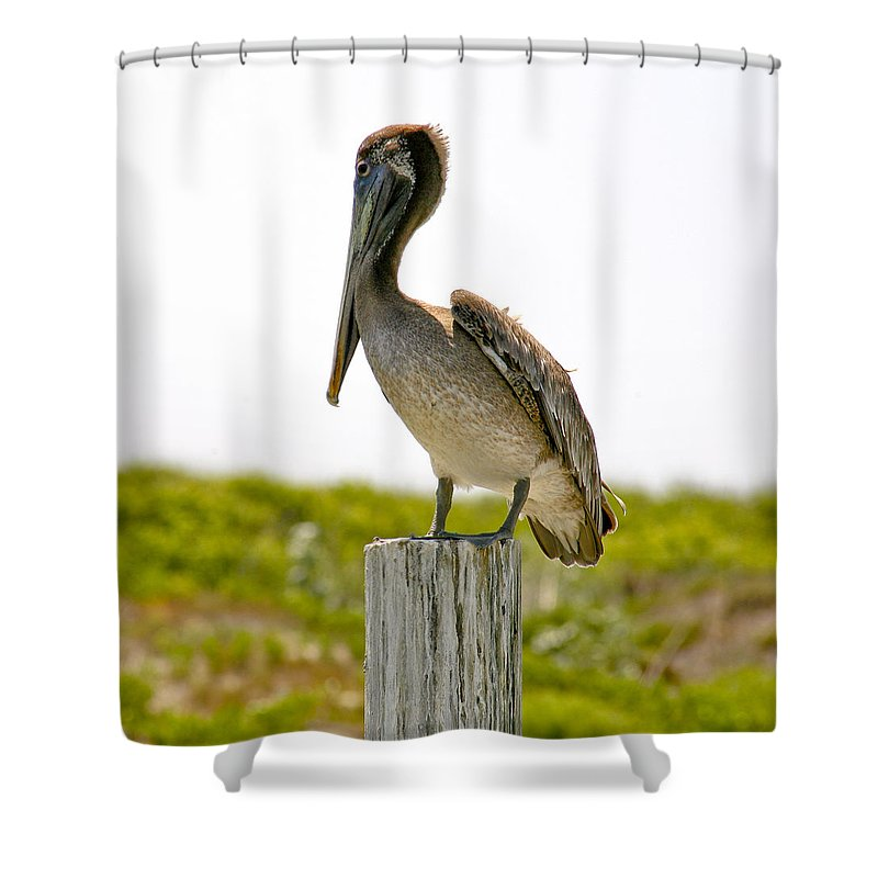 Pelican Shower Curtain featuring the photograph Pretty Pelican by Marilyn Hunt