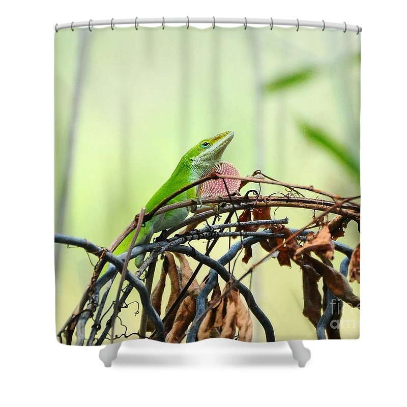 Lizard Shower Curtain featuring the photograph Pretty Penny 1 by Al Powell Photography USA