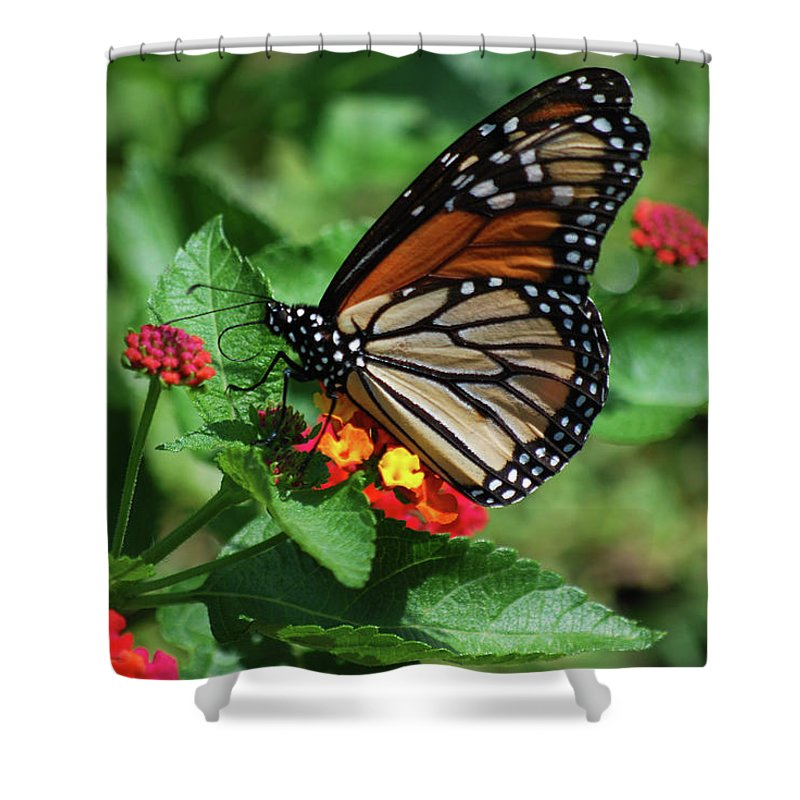 Monarch Shower Curtain featuring the photograph Pretty Spots by Lori Tambakis