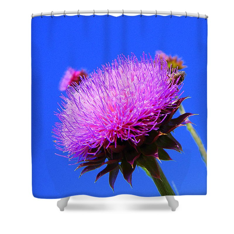 Thistle Bloom Shower Curtain featuring the photograph Pretty Weed by J R  Seymour