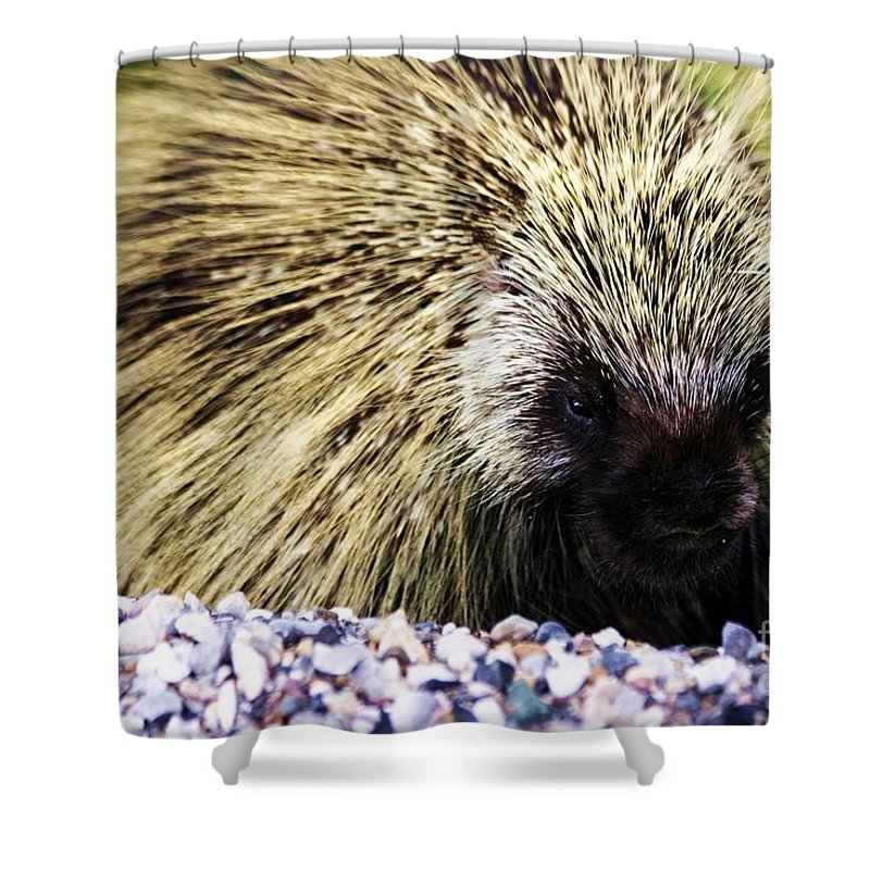 Porcupine Shower Curtain featuring the photograph Prickly by Donna Cain