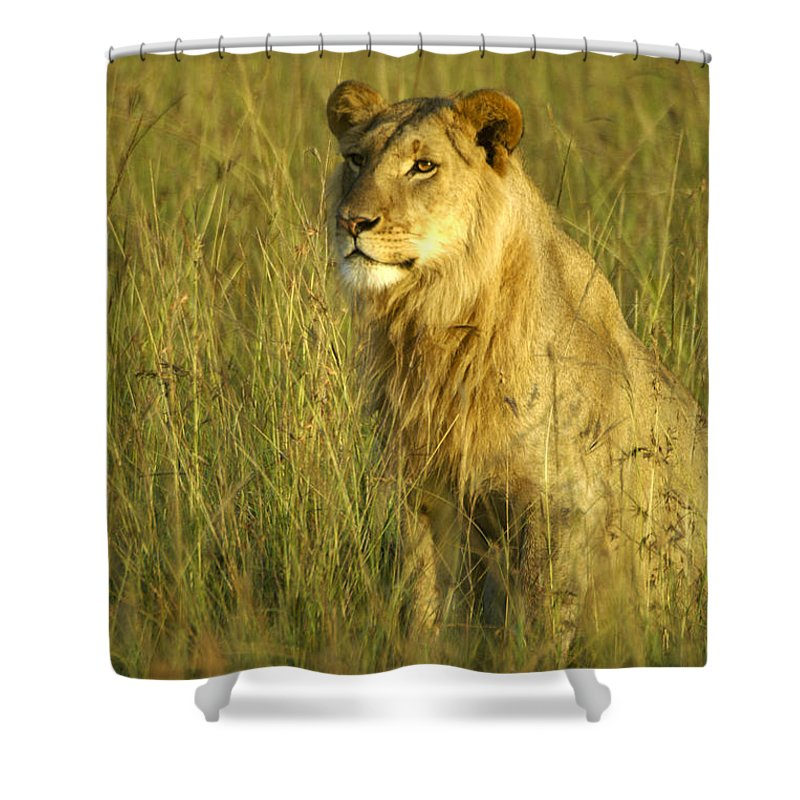 Africa Shower Curtain featuring the photograph Princely Lion by Michele Burgess