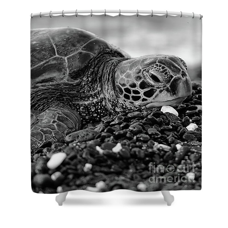 Black And White Shower Curtain featuring the photograph Profile Hawaiian Sea Turtle Bw by Amber D Meredith Photography