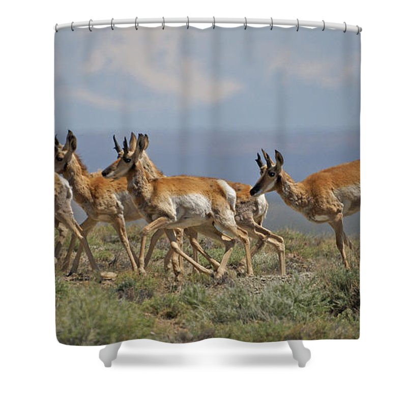 Pronghorn Shower Curtain featuring the photograph Pronghorn Antelope Running by Heather Coen