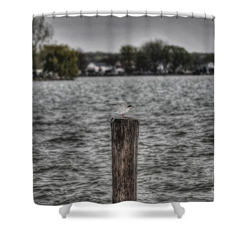 Chris Fleming Shower Curtain featuring the photograph Protecting His Interests by Chris Fleming