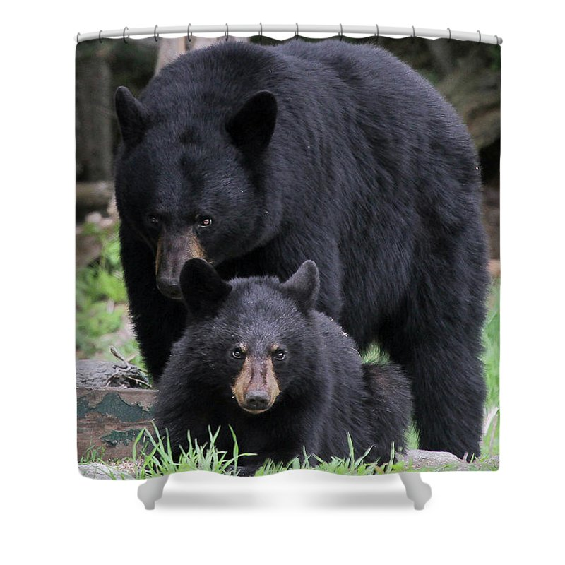 Shower Curtain featuring the photograph Protecting The Cub by Sharon Fiedler