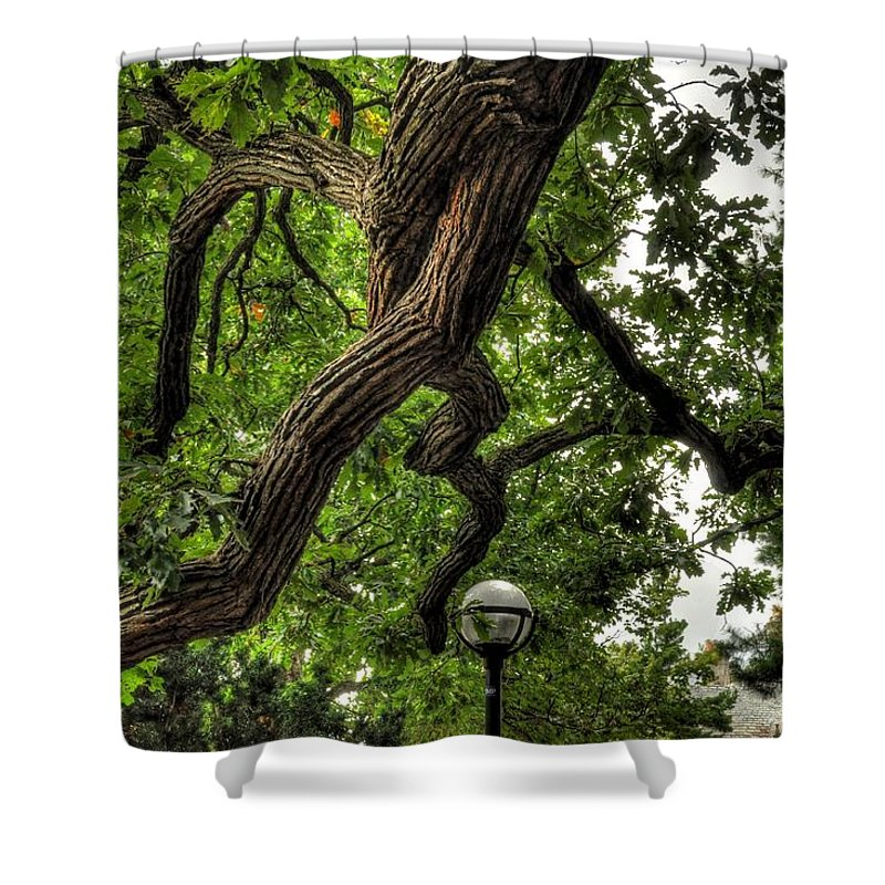 Chris Fleming Shower Curtain featuring the photograph Protective Oak by Chris Fleming