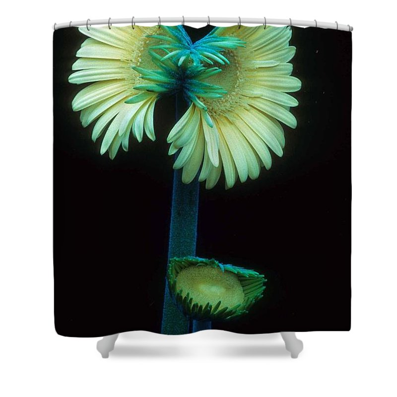 Gerber Shower Curtain featuring the photograph Proud Gerber Parents by Laurie Paci