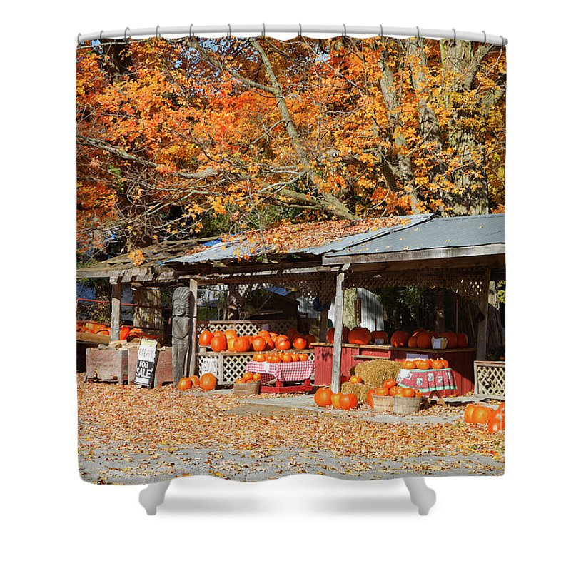 Shed Shower Curtain featuring the photograph Pumpkins For Sale by Louise Heusinkveld