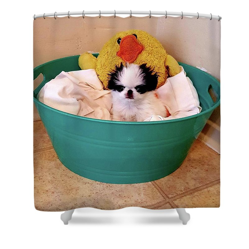 Japanese Chin Shower Curtain featuring the photograph Puppy in a Bucket, Japanese Chin by Kathleen Sepulveda