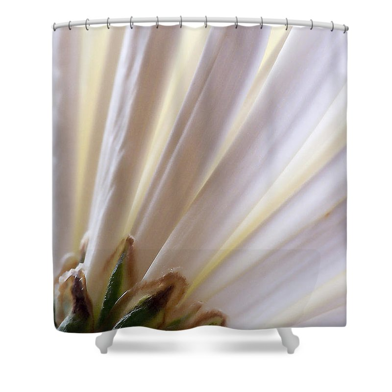Macro Shower Curtain featuring the photograph Pure by Lauren Radke