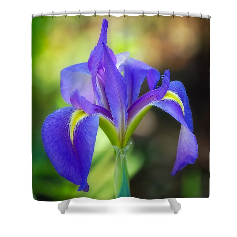 Iris Shower Curtain featuring the photograph Pure Simple Beautiful by Rich Leighton