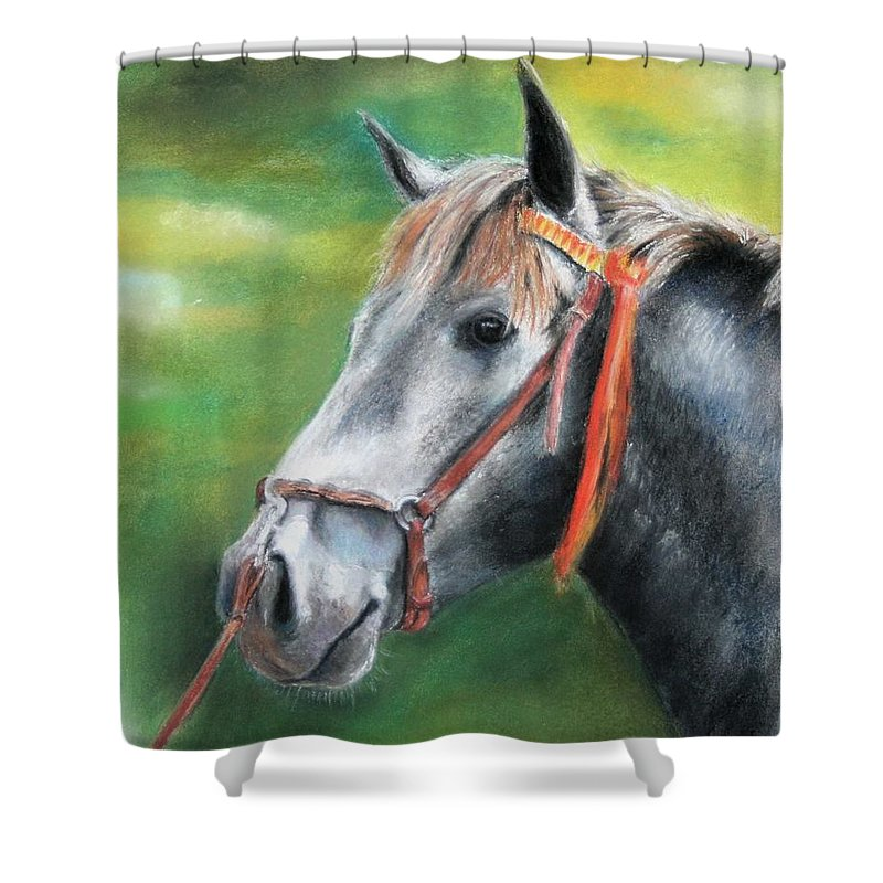 Horse Shower Curtain featuring the painting Pure Spanish by Ceci Watson