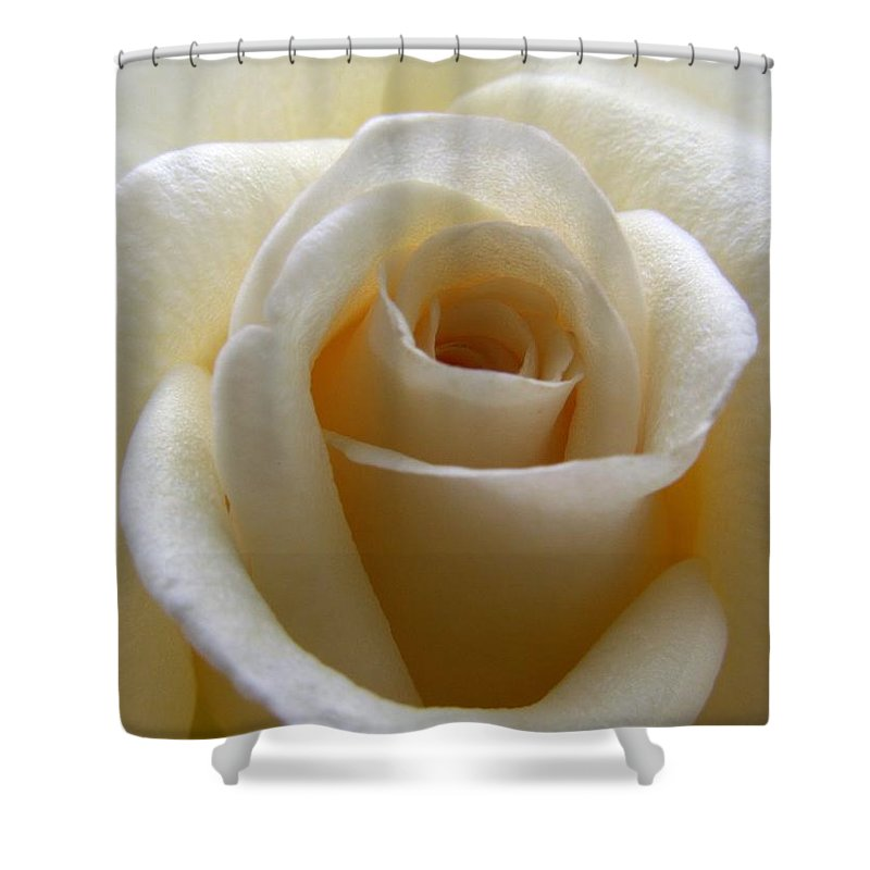 Rose Shower Curtain featuring the photograph Purity by Amy Fose