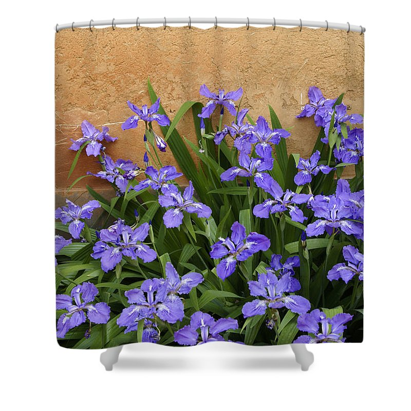 Flowers Shower Curtain featuring the photograph Purple And Orange by Michele Burgess