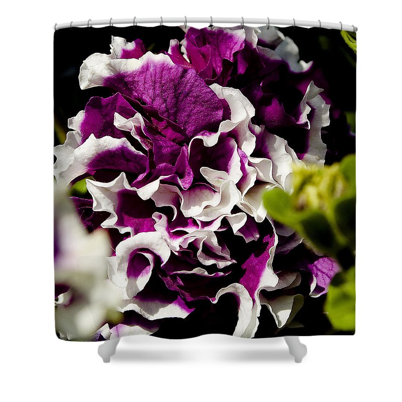 Floral Shower Curtain featuring the photograph Purple And White by David Patterson