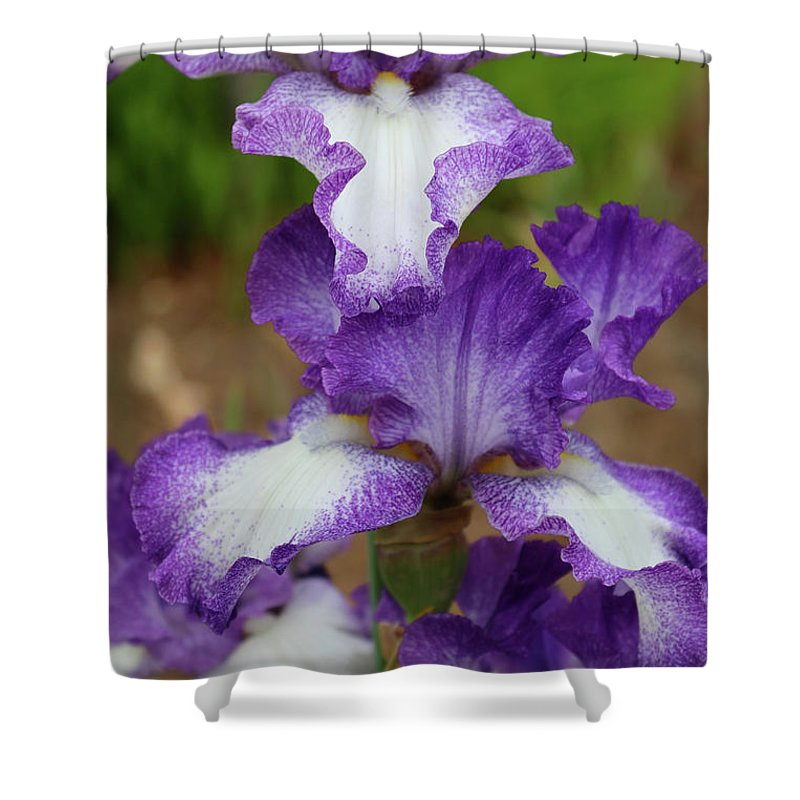 Iris Shower Curtain featuring the photograph Purple And White Iris Layers by Carol Groenen