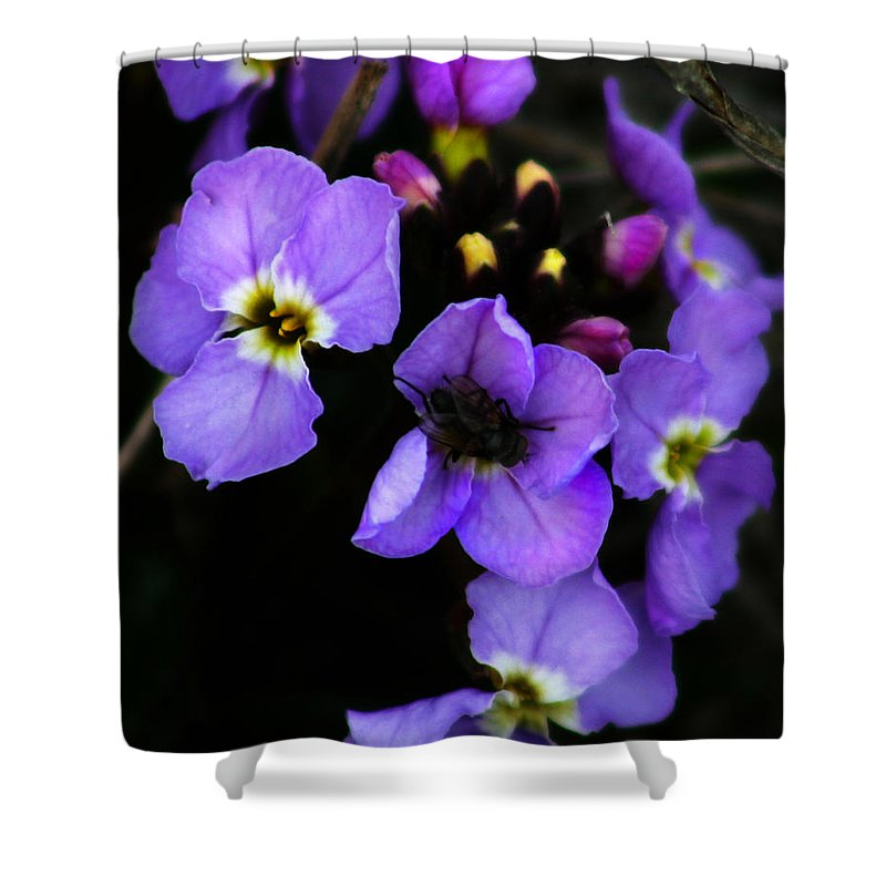 Flowers Shower Curtain featuring the photograph Purple Arctic Wild Flowers by Anthony Jones