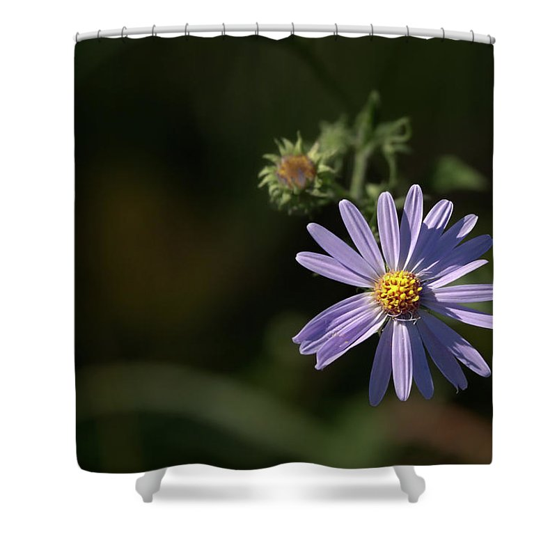 Aster Shower Curtain featuring the photograph Purple Aster by Grant Groberg