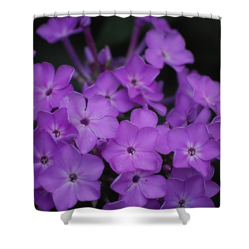 Digital Photo Shower Curtain featuring the photograph Purple Blossoms by David Lane