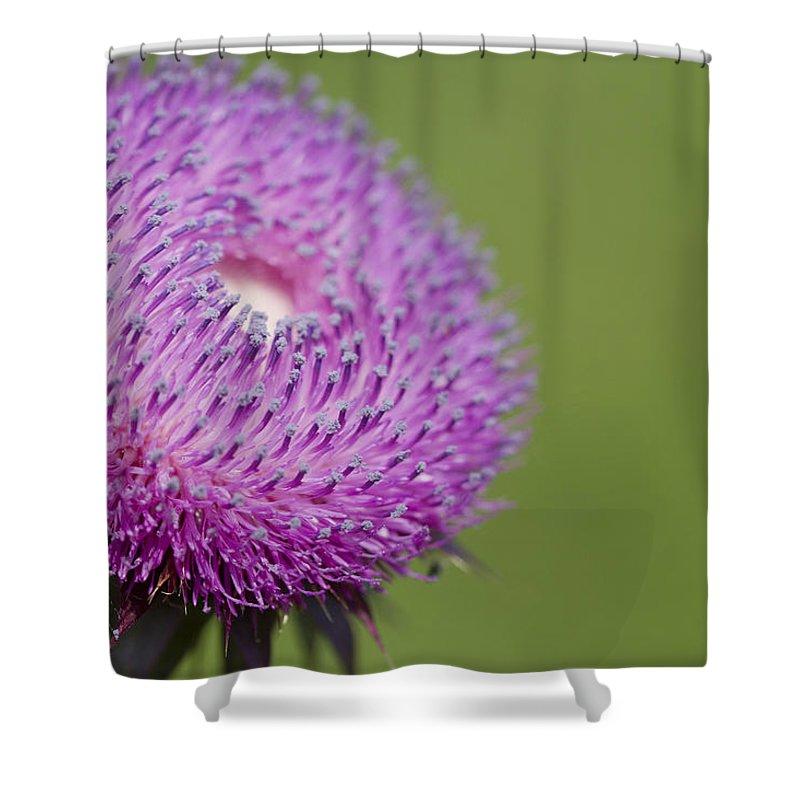 Carduus Nutans Shower Curtain Featuring The Photograph Purple Bristle Thistle