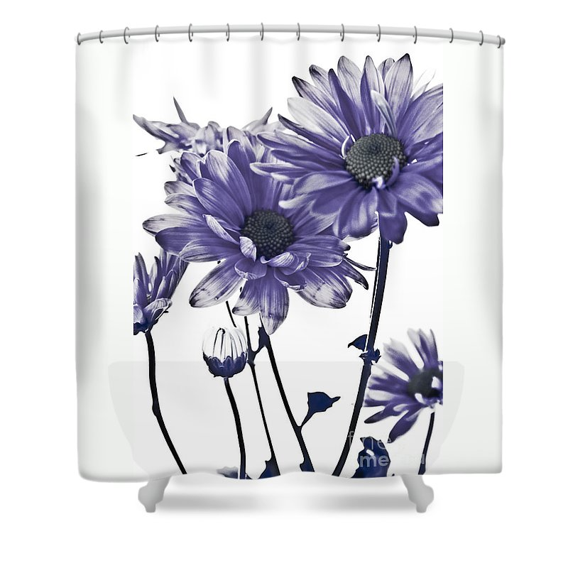 Flowers Shower Curtain featuring the photograph Purple Daisies by Robin Lynne Schwind