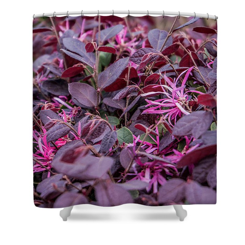 Darrell Shower Curtain featuring the photograph Purple? by Darrell Clakley