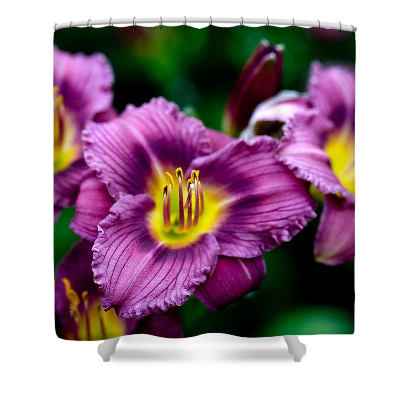 Flower Shower Curtain featuring the photograph Purple Day Lillies by Marilyn Hunt