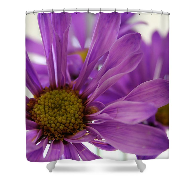 Flowers Purple Macro Daisy Spring Yellow Digital Photography Shower Curtain featuring the photograph Purple Delight by Linda Sannuti