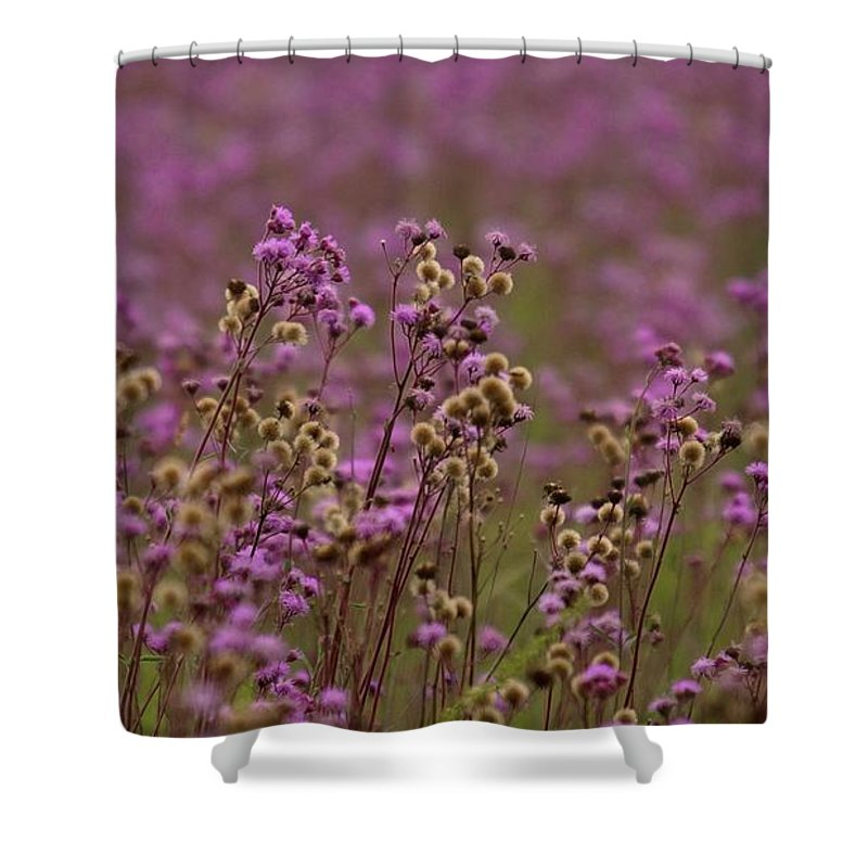 Flower Shower Curtain featuring the photograph Purple Fields by Suzanne Morshead