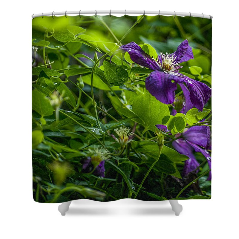 Flower Shower Curtain featuring the photograph Purple Flower by Adriana Marteva