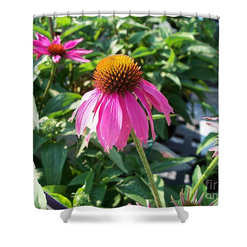 Floral Shower Curtain featuring the photograph Purple Flower by Eric Schiabor