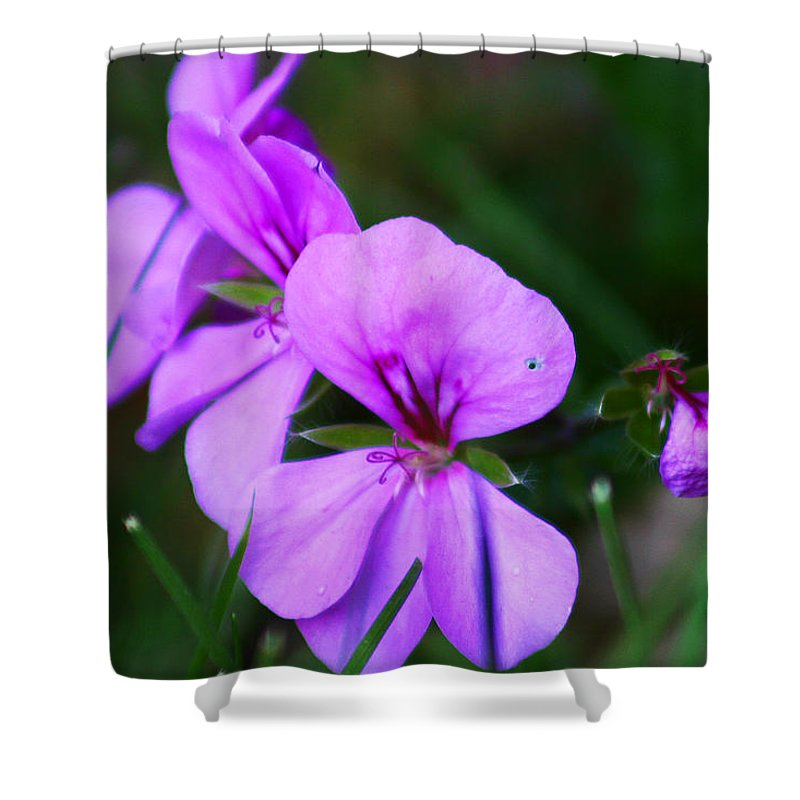 Flowers Shower Curtain featuring the photograph Purple Flowers by Anthony Jones