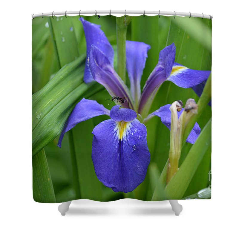 Purple Iris With Insect Prints Shower Curtain featuring the photograph Purple Iris With Insect by Ruth Housley