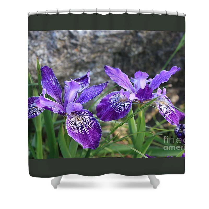 Purple Shower Curtain featuring the photograph Purple Irises With Gray Rock by Carol Groenen